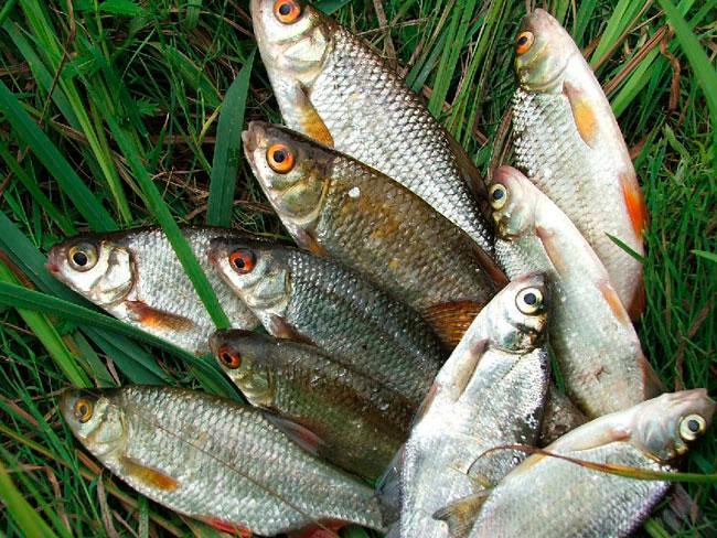 Рыбалка на Полесье река Припять озеро Лаховское