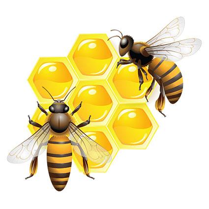 Пчелы мед Лунинецкий район